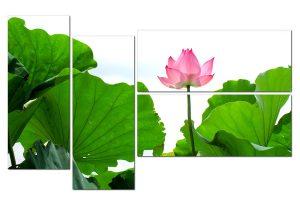 tranh hoa sen HL0101