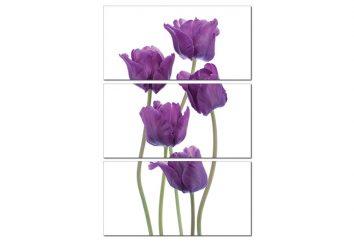Tranh treo tường hoa Tulip tím HL0128