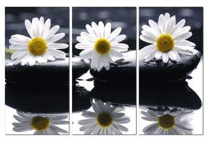 Tranh treo tường hoa cúc Sp0106