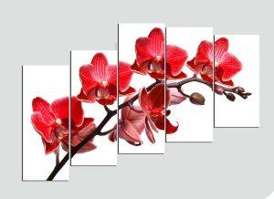 Tranh treo tuong hoa lan HL102